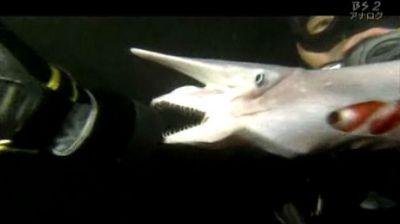 Japanese Goblin Shark